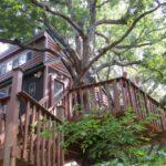 Treehouse Rentals