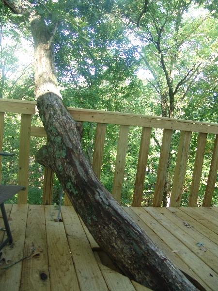 White Oak tree house upper deck
