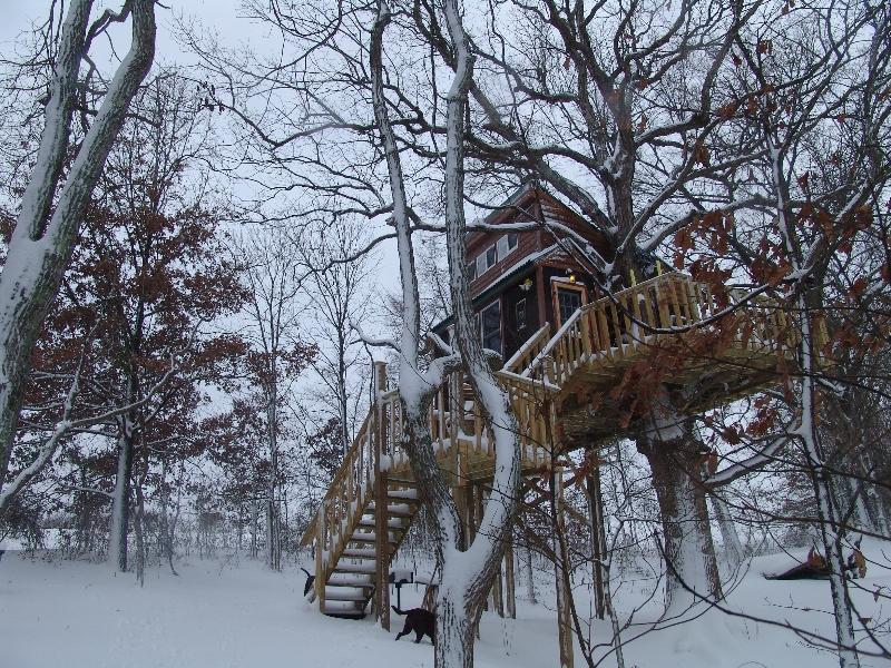 White Oak tree house in winter