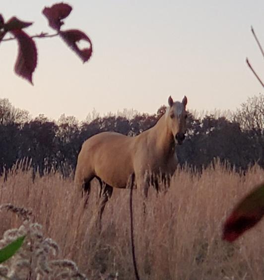 Horseback Shawnee at Timber Ridge Outpost